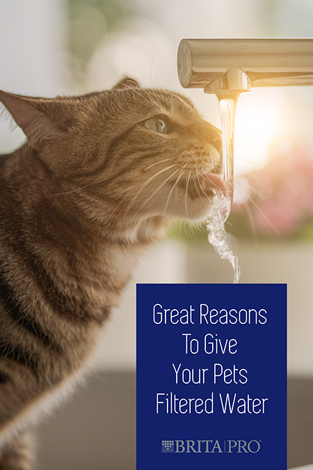 Filtered Water for Pets